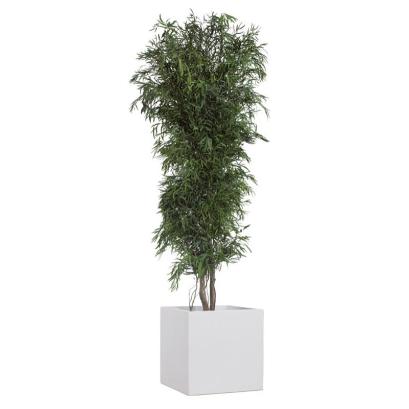 Eukalyptusstrauch Sam clever mieten statt kaufen