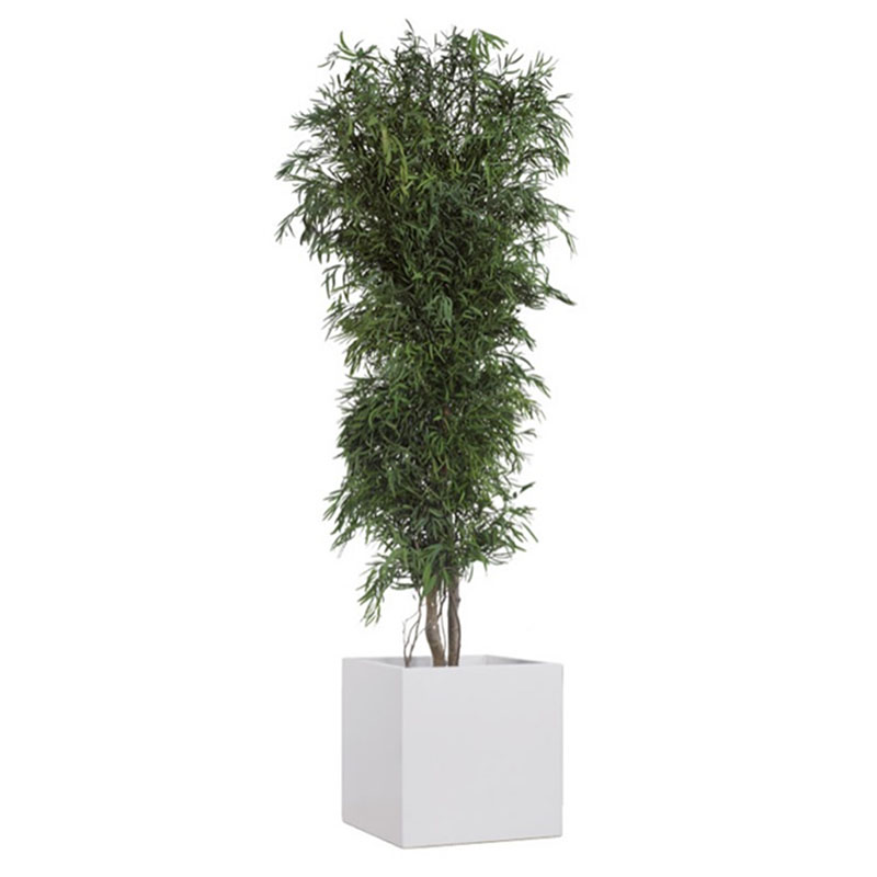Eukalyptusstrauch Olli clever mieten statt kaufen