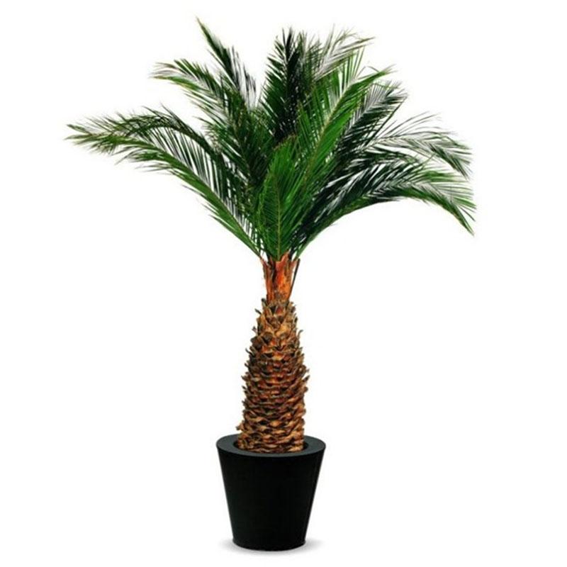 Palme Tarzan clever mieten statt kaufen